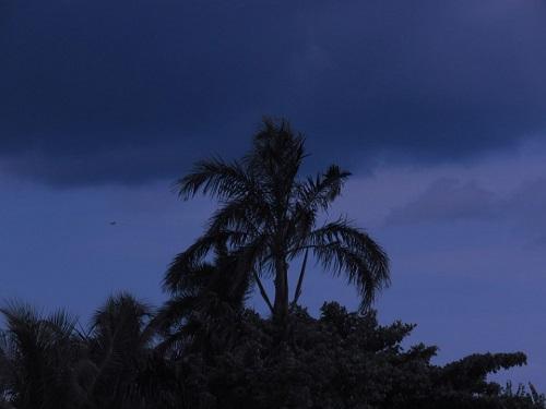 Palme au Jamaïque