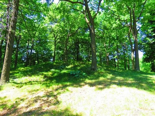 Forêt au Québec