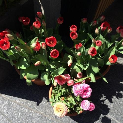 Fleurs pour les victimes