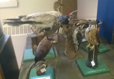 oiseaux mille îles
