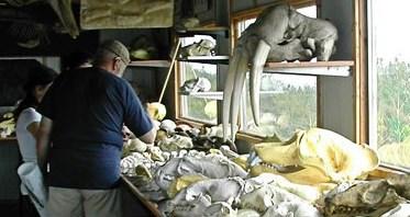 musée du squelette île verte