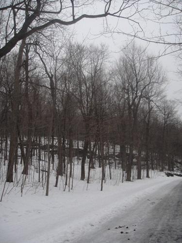 Parc Mont-Royal en hiver