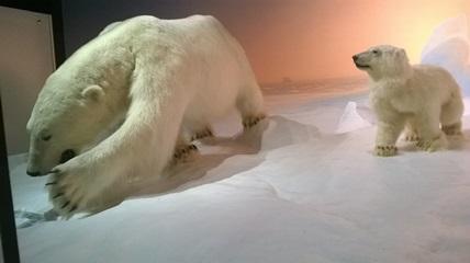 Deux ours polaires