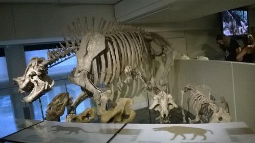 Musée de la nature d'Ottawa
