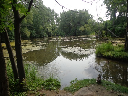 étang parc des prairies