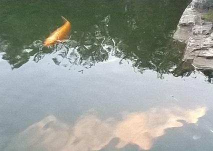 étang de poissons