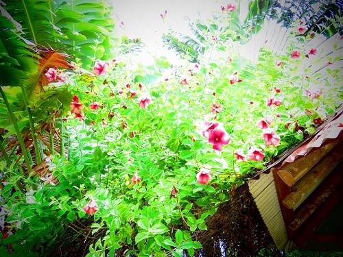 Fleurs au Jamaïque