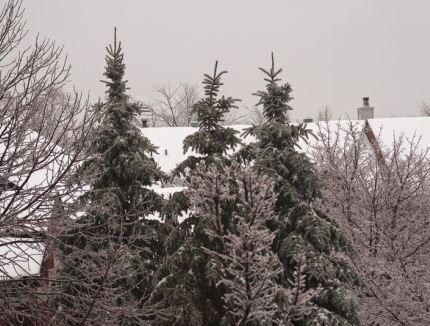 Île-des-Soeurs en hiver
