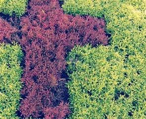 Croix en herbe