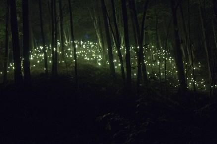 feux de la forêt