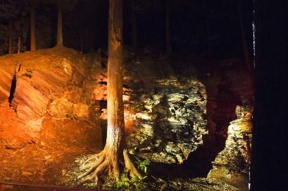 arbre foresta lumina
