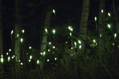 lumières vertes
