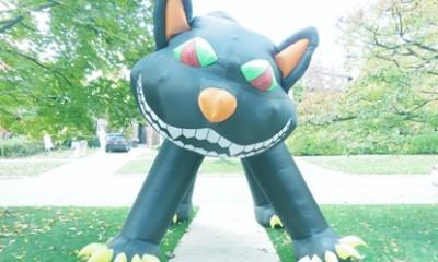 un gros chat