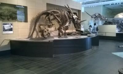 musée de la nature
