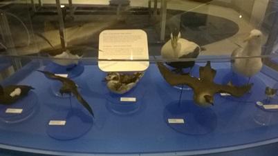poissons préhistoriques