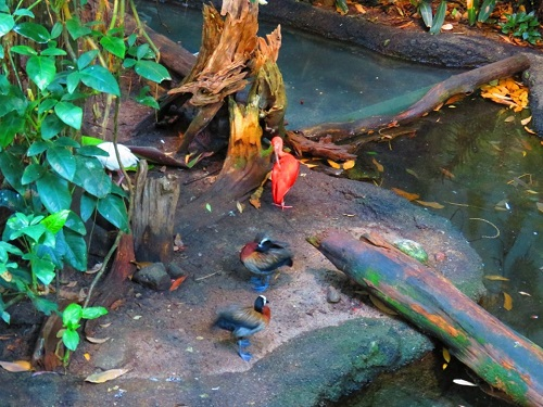 Biodome, oiseaux dans l'eau