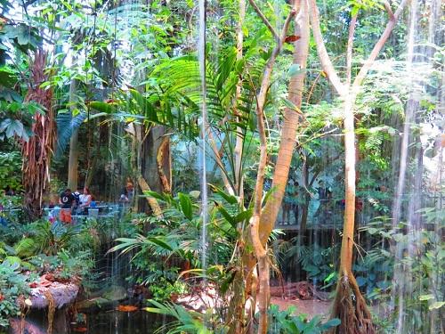 Habitat des caïmans