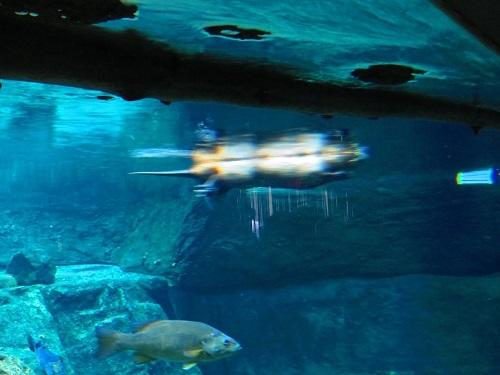 Castor nage
