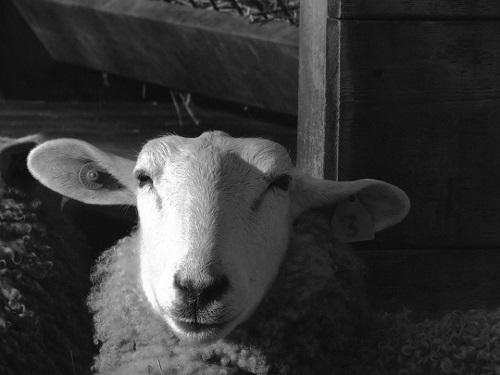 Miuton