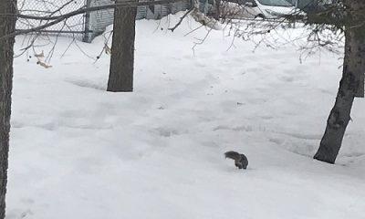 Neige et écureuil