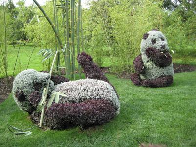 Pandas géantes