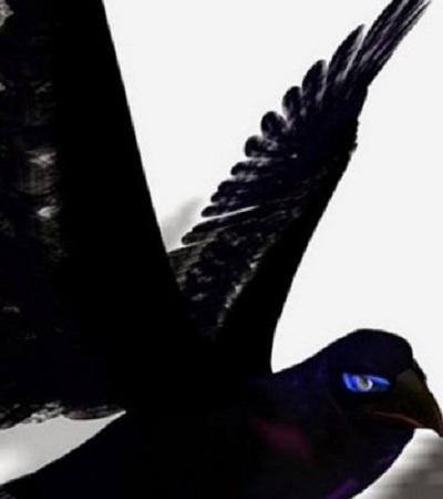 Raven Sondée narcose