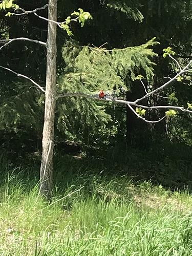 Oiseau dans la forêt