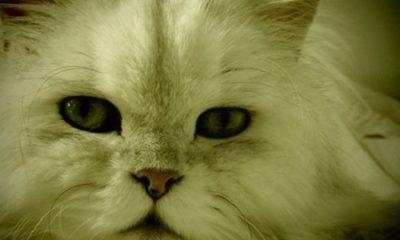 Le chat le plus beaux au monde. Photographie par Megan Jorgensen.