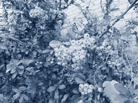 L'art est à l'image de la création. C'est un symbole, tout comme le monde terrestre est un symbole du cosmos. (Paul Klee, artiste peintre et sculpteur, extrait de Théorie de l'art moderne). Photographie de Megan Jorgensen.