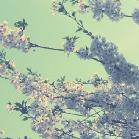 Fleurs de la paix. Photo de Megan Jorgensen.