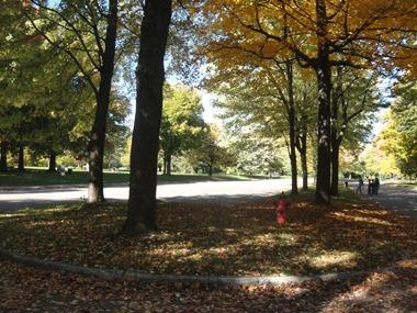 allée principale parc angrignon