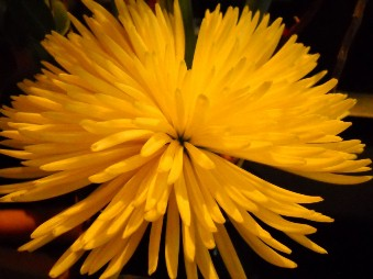 amazingly nice yellow flower