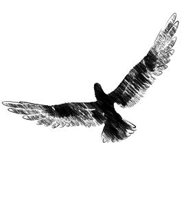 amerindiens oiseaux