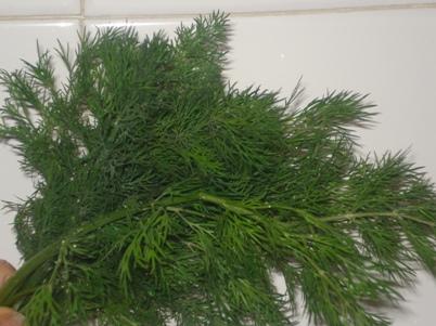aneth vert