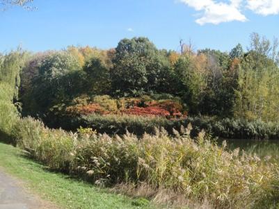 parc angrignon en automne