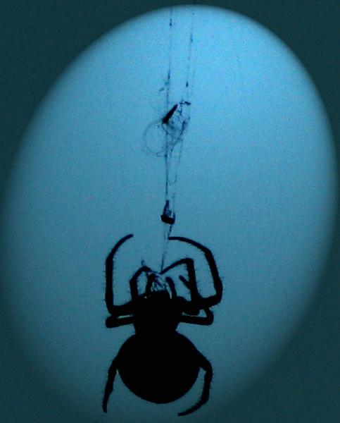 araignée dans la lune