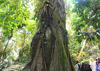 arbre biodome