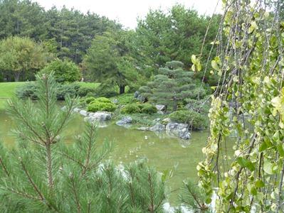 arbustes jardin japonais