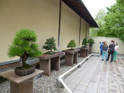 art de bonsai
