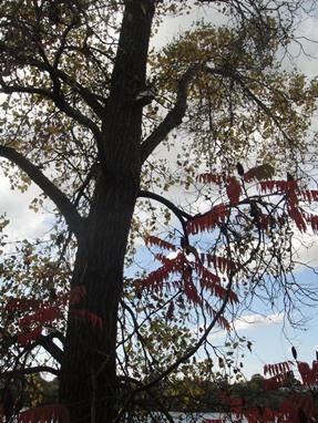 automne au parc de l'ile de la visitation