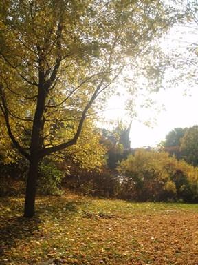 automne parc jean drapeau