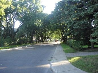 avenue powell