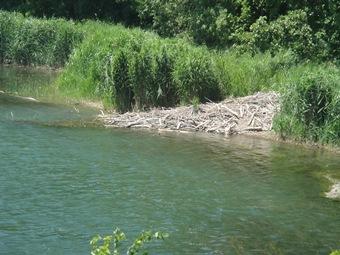 barrage de castors