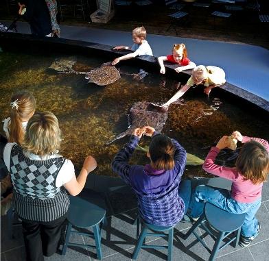 bassin tactile musée du fjord