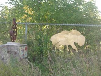 bison au parc du crépuscule