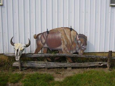 bison sur ile