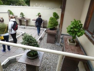 bonsai de montreal