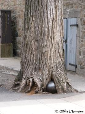 boulet arbre