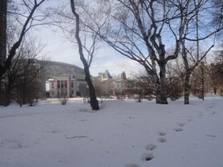 campus mcgill en hiver