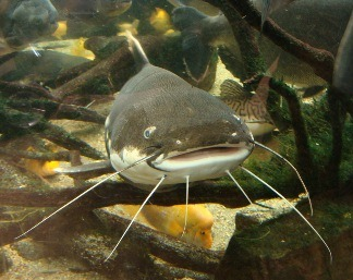 catfish biodome